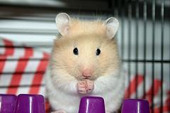 Hamster como ganarnos su cofianza