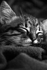 Los gatos y los viajes II