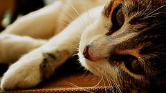 Aspectos a conocer antes de llevar un gato a casa