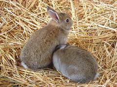 Adiestrar un conejo