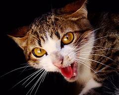 Cat ... Sim... Eu não gosto de segunda feira!!!!!!!!!!!!!!!! no PS