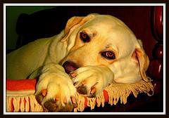 Eliminar que nuestro perro muerda objetos de la casa