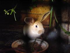 Conejos rebeldes