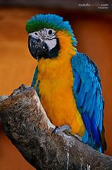Enfermedades de las plumas