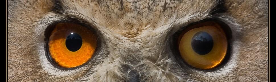 Aquellos ojos dorados