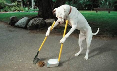 Las pegatinas de tu perro