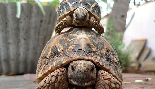 Las tortugas: unos chicos duros
