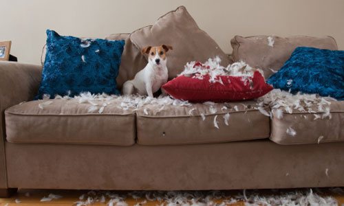 Apartment dogs mascotas - Perros para tener en casa ...