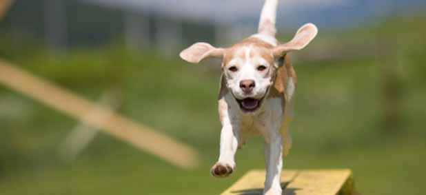 adiestramiento-canino-barcelona-perros.jpg