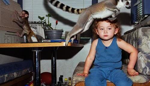 ¿Vale lémur como animal de compañía?