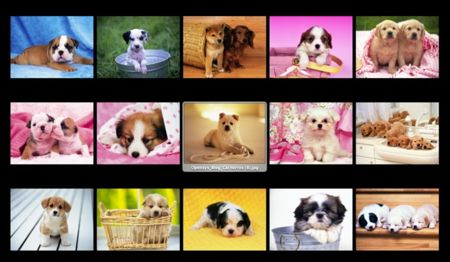 Las vacunas de tu cachorro
