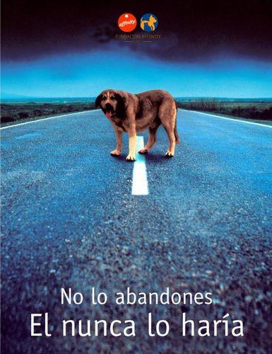 perros_abandonados_15.jpg