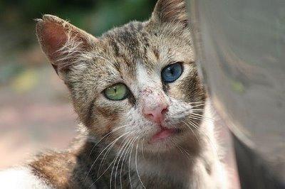 De la calle a un hogar. Adoptar gatos callejeros