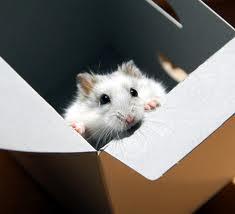 El-hamster-Artista-escapista.jpg
