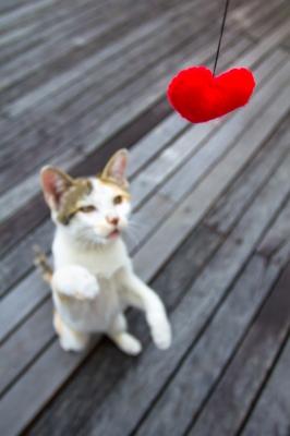 Consigue que tu gato juegue: el catnip.