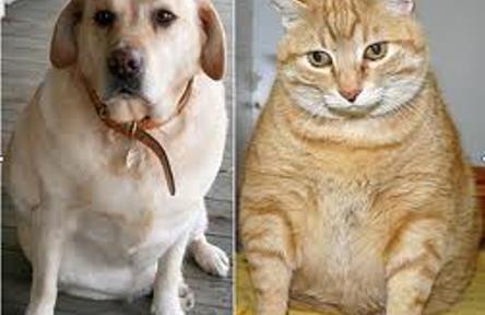 La obesidad en nuestras mascotas