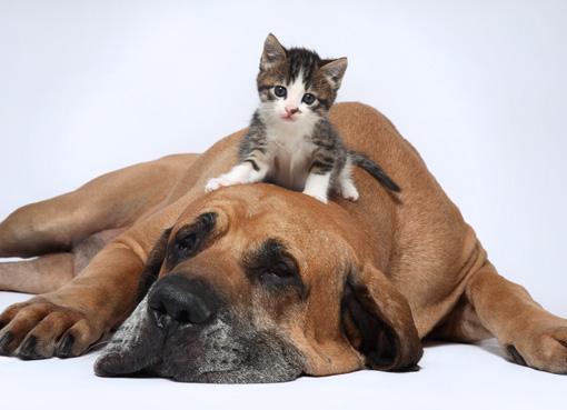 perro-y-gato-como-saber59237.jpg