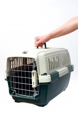¿Qué modelo de transportín elijo para mi gato?