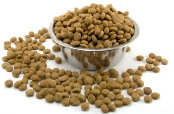 El pienso sin cereales, la mejor alternativa