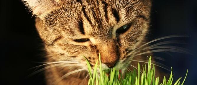 Gatos devoradores de plantas