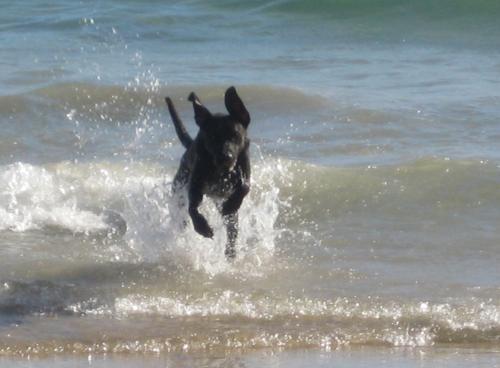 Perro-playa.jpg