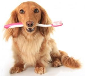 higiene dnetal en perros