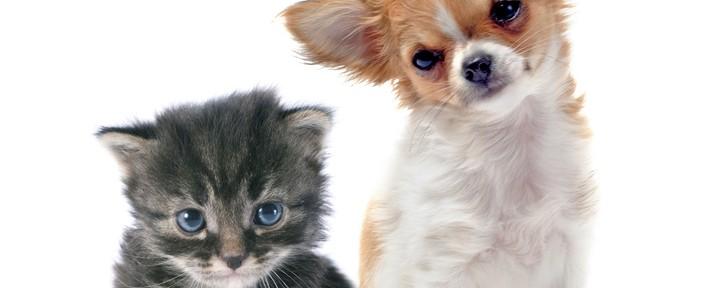 Patologías en las glándulas anales de nuestras mascotas