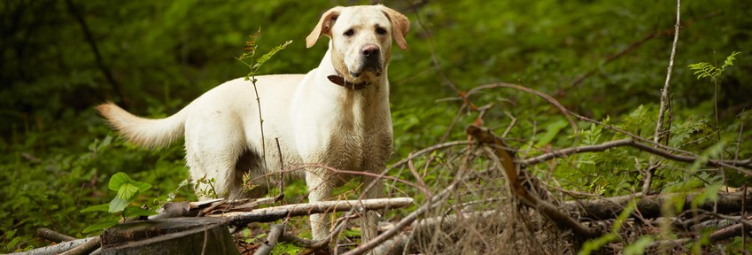 dog-in-nature-849x288.jpg