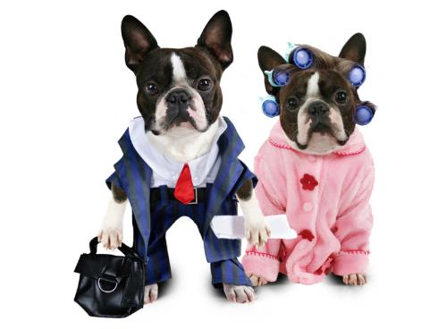 dog with suit