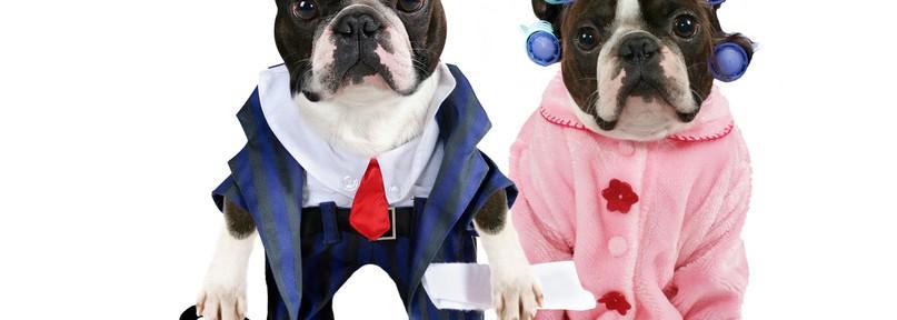Vestir a nuestro perro ¿capricho o necesidad?