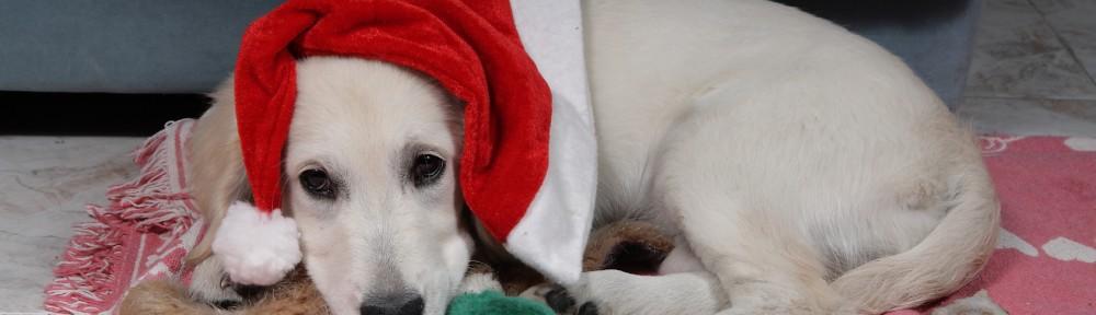 navidad-perro-1000x288.jpg
