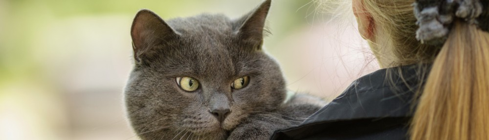 british-shorthair-1000x288.jpg