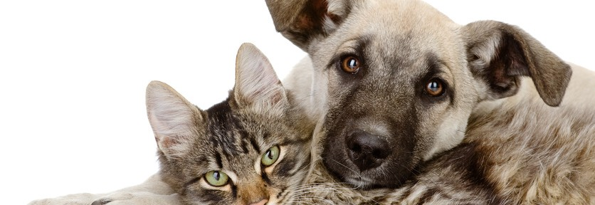 cat-and-dog-836x288.jpg