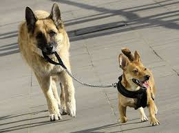 Cosas que no debes hacer cuando sales con tu perro (II)