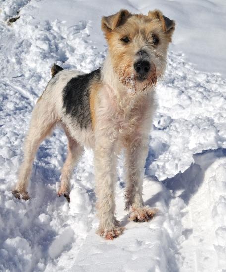 invierno perro
