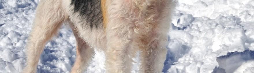 invierno-perro-1000x288.jpg