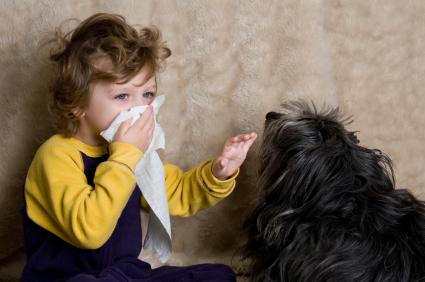 Alergias a los animales: cómo sobrevivir a ellas