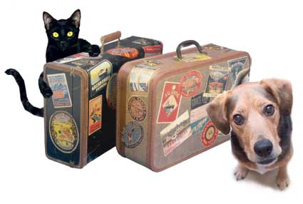 Este verano viaja a todas partes con tu mascota