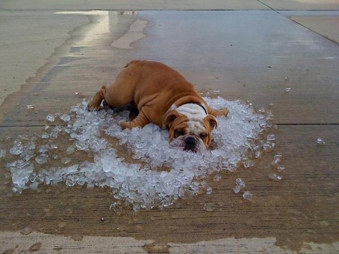 proteger-perro-sol