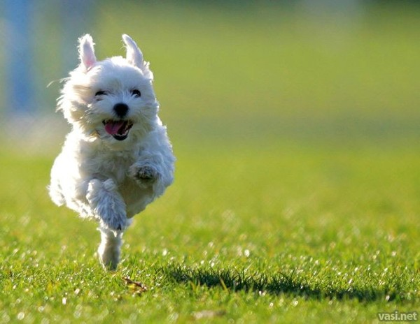perro-ejercicio
